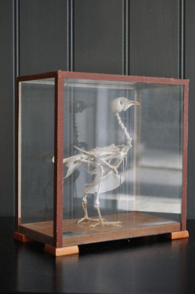cased bird