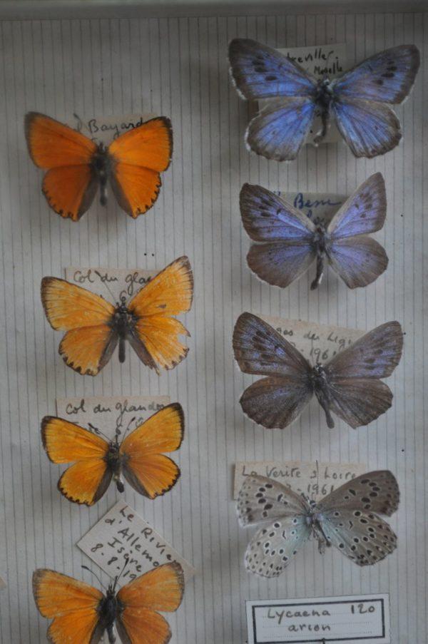 Case of butterflies